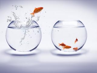 poisson rouge dans un aquarium