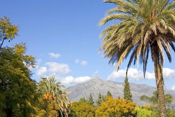 landscape with la concha mountain in marbella