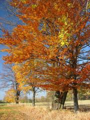Garden Poster autumn landscape