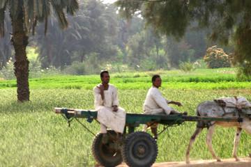 travailleurs  dans le delta du nil en egypte