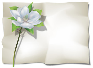 magnolia on sheet
