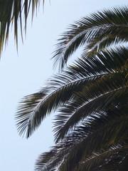 palmiers en contre jour