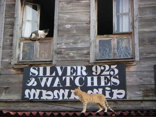 katzen ohne sorgen.