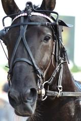 le portraît de ce beau cheval de course!
