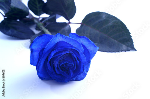 blaue rose stockfotos und lizenzfreie bilder auf fotolia. Black Bedroom Furniture Sets. Home Design Ideas