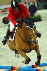 equestrian vi