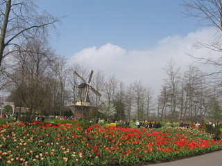 tulip and mill