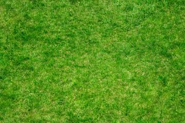 grass 7