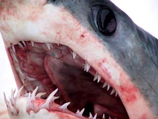 shark 05