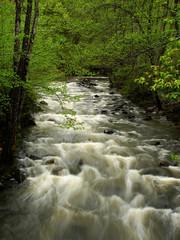 Foto auf Leinwand Fluss wild river