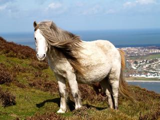 mountain pony 4