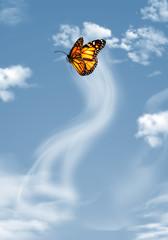 papillon sur fond de ciel bleu