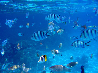 tropical fish near the surface