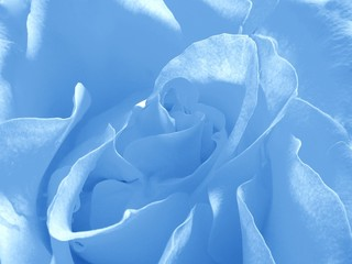 blue background with rose