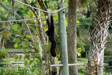 monkey in a natural park, florida, u.s.a.