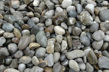 stein 10
