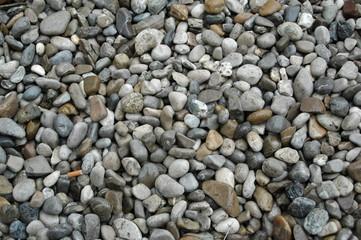stein 11