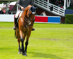thoroughbred horse and jockey