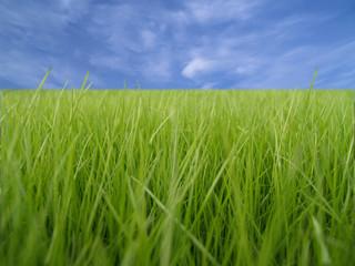 hierba verde sobre cielo azul