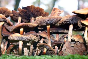 little fungus