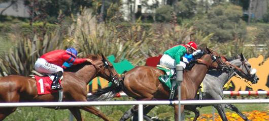 race horses on the turf
