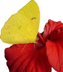 rouge,jaune,blanc