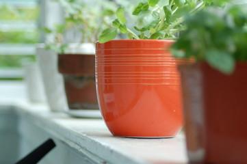 flower pot on porch