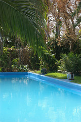 pool with palm