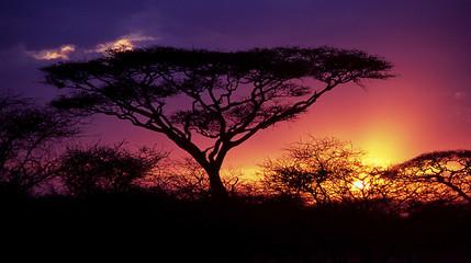 Fotobehang Afrika acacia tree