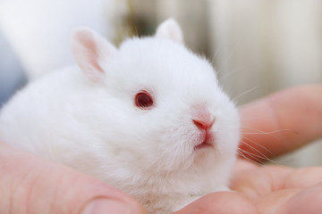 minature rabbits