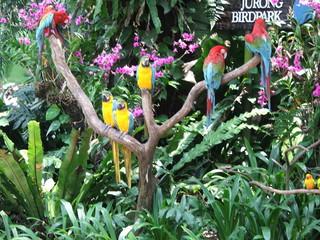 perched parrot's