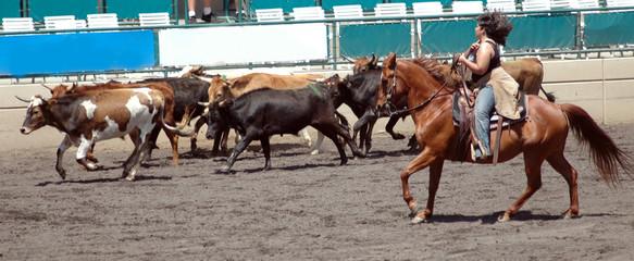 cowgirl & steers