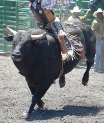 bull throwing rider