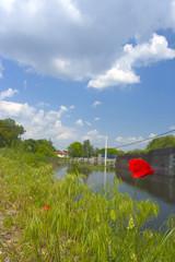 alone red flower