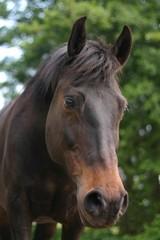 curious pony