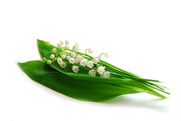 Photo sur Aluminium Muguet de mai lily-of-the-valley on white