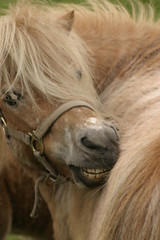 this horse his itch
