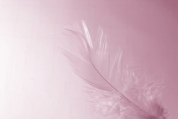 little girl feather