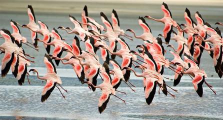 Foto op Aluminium Flamingo flamingoes flying low