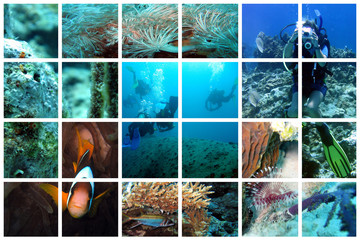 fabulous underwater collage