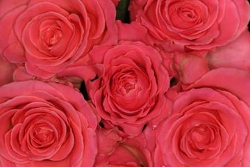 quintet of roses