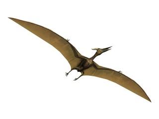 pterus the pterosaure