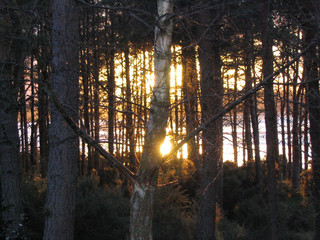 woods at sunset