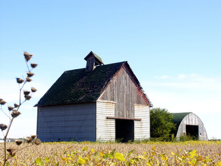 corn crib & shed