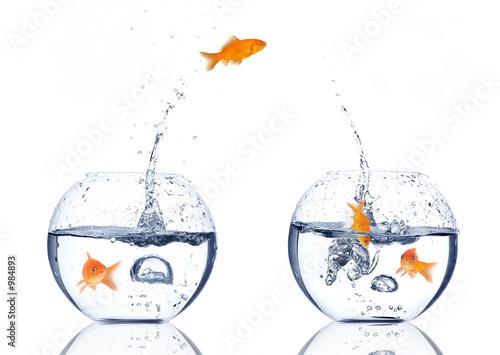 """""""splash"""" stockfotos und lizenzfreie bilder auf fotolia"""