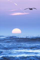 seagulls and sunset