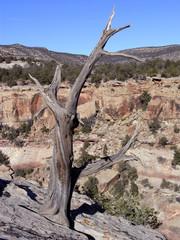 lone branch