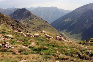 moutons sur les crêtes