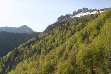 etage montagnard, étage alpin