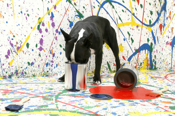 artistic pup